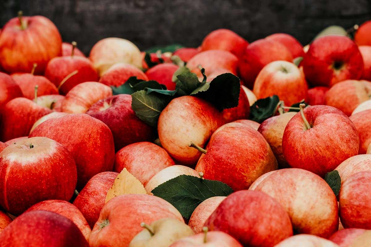 Frische Äpfel